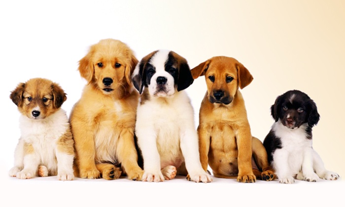 محلات بيع كلاب بالرياض