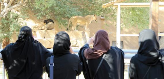 حديقة الحيوان بالرياض صور و مواعيد واسعار الدخول السعودية اليوم